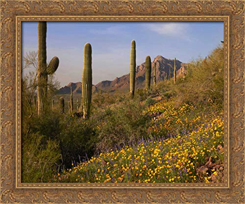Saguaro Cacti and California Poppy Field at Picacho Peak State Park, Arizona 24x20 Gold Ornate Wood Framed Canvas Art by Fitzharris, Tim