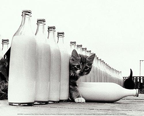New imagesaffiche 24x30cm Paradise For Cats/Kittens In Paradise/Kätzchen im Paradies