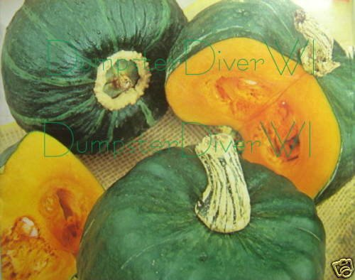 - BUTTERCUP Squash Organic 20+ seeds Rich Extra Sweet Flavor Heirloom NON-GMO