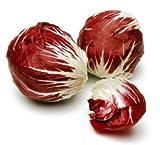 Radicchio Rossa di Treviso Non GMO Heirloom Italian Garden Vegetable 100 Seeds by Sow No GMO