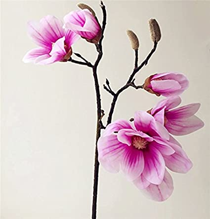 39a23cb7a97 Amazon.com: jiumengya 2pcs Real Touch Orchids Latex Magnolia Large ...