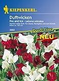 Kiepenkerl Lathyrus odoratus (Duftwicken) Fire and Ice