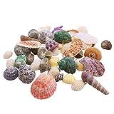 LoveInUSA Sea Shells Mixed Beach Seashells Approx. 56~70 Random Colors