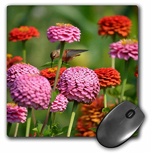 3dRose PS Flowers - Hummingbird Flight and Zinnia Flowers - Floral Photography - MousePad - Flight Zinnia