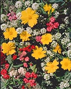 2 oz Low Profile WildFlower Seed Mix ,1 oz Seed, Covers approx 125 square ft