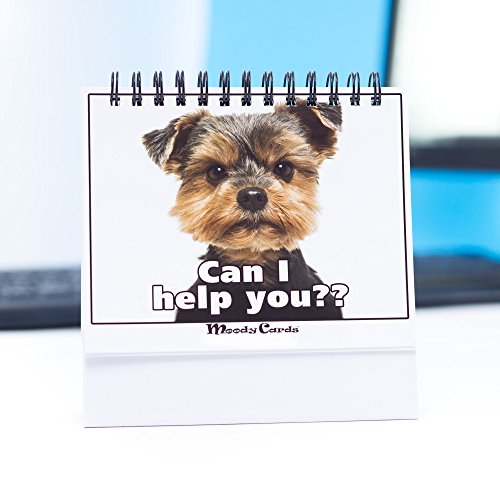 Funny Office Gifts - Doggy Moodycards! Great Cubicle Accessories - Make Everyone Laugh with These Lovable Pets -Hilarious Dog Pictures Tells Everyone How You Feel - Fun, Amusing, Useful & Adorable