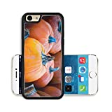 Liili Premium Apple iPhone 6 iPhone 6S Aluminum Backplate Bumper Snap Case IMAGE ID 32805764 Focus on a pumpkin among others at a local farmer s market for Thanksgiving Autumn theme background