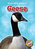 Geese, Megan Borgert-Spaniol, 1600147224