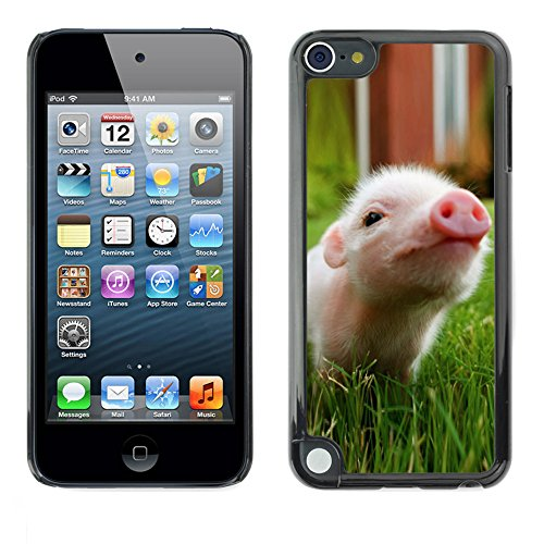 STPlus Cute Pig Animal Hard Cover Case for Apple iPod Touch 5 (Pig Ipod Touch 5 Case)