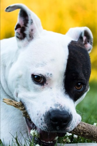 Adorable American Staffordshire Terrier Dog Portrait Journal: 150 Page Lined ()
