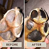 Natural Dog Company Paw Soother, Heals