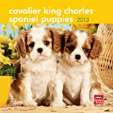 Cavalier King Charles Spaniel Puppies 2013 Mini ` (Multilingual Edition)