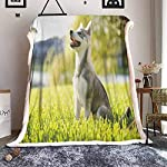 Cranekey Alaskan Malamute Sherpa King Blanket Klee Kai Puppy Sitting on Grass Looking Up Friendly Young Cute Animal for Bed or Couch Ultimate Sherpa Throw Multicolor W59xL47 inches 6