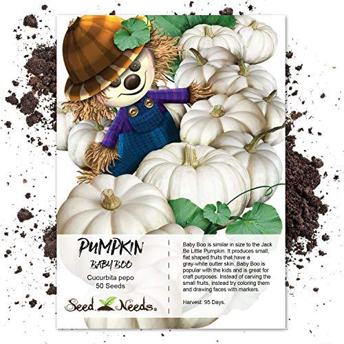 White Pumpkin Seeds - Seed Needs, Baby Boo Pumpkin (Cucurbita Pepo) 50 Seeds Non-GMO