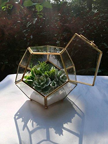 Bella's garden Geometric Terrarium Container Desktop Planter for Succulent Fern Moss Air Plants Holder Miniature Outdoor Fairy Garden Gift Wedding Ring Glass Box (gold with food and door)