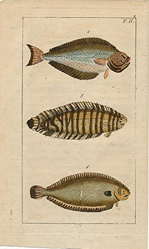 Fish varieties plate II charming 1810 scarce antique color Fish print