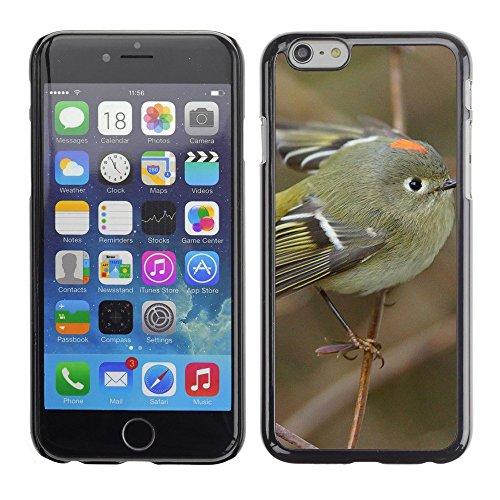 """Hülle Case Schutzhülle Cover Premium Case // F00002676 Vogel // Apple iPhone 6 6S 6G 4.7"""""""
