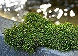 SuperMoss (21588) Sheet Moss Dried, Natural  (20-24 sq. ft. Approx 3.5lbs)