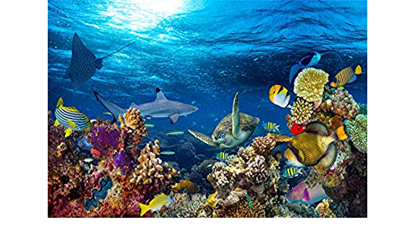 Animals 8x10 FT Backdrop Photographers,Sketch of Scuba Diver Holding Fin of Dolphin Over Coral Reefs Fish Underwater Background for Child Baby Shower Photo Vinyl Studio Prop Photobooth Photoshoot
