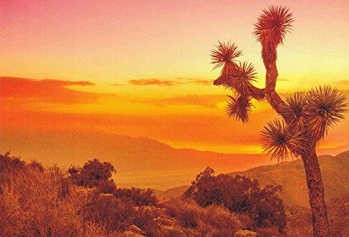 USNATPKS14 - JOSHUA TREE NATIONAL PARK, CALIFORNIA - A U.S. NATIONAL PARK POSTCARD .. from Hibiscus - California Fair Valley