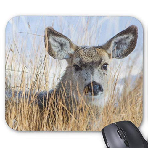Gaming Mouse Pad Non-Slip Water Resistant Rubber Base Cloth Computer Mouse Mat-(Wyoming Sublette County Mule Deer doe Resting Mouse pad)
