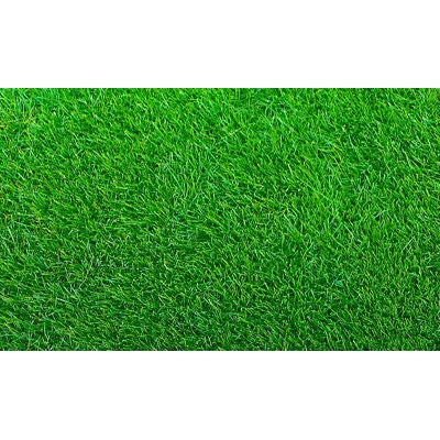Empire Zoysia Grass Seeds/Lawngrass 1/8 Lb : Garden & Outdoor