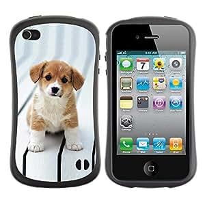 All-Round híbrido de goma duro caso cubierta protectora Accesorio Generación-I BY RAYDREAMMM - Apple iPhone 4 / 4S - Puppy Cut Adorable Brown White Big Eyes
