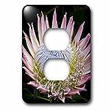 3dRose lsp_72159_6 Flowers, Kirstenbosch Gardens, South Africa-Af42 Rbe0058 Ralph H Bendjebar 2 Plug Outlet Cover