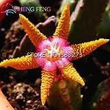 100pcs Stapelia Seeds Lithops Mix Succulents Raw Stone Cactus Seeds Rare Fresh Bonsai Plants For Home & Garden Flower Pots Plant