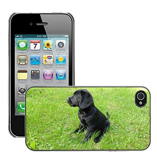 Bild Hart Handy Schwarz Schutz Case Cover Schale Etui // M00134074 Puppy Labrador Hund Niedlicher // Apple iPhone 4 4S 4G