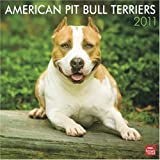American Pit Bull Terriers 2011 Square 12X12 Wall by BrownTrout Publishers Inc (2010-08-01)