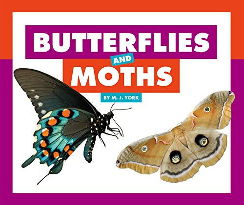 Butterflies and Moths (Comparing Animal Differences) (Caterpillar Antennae)