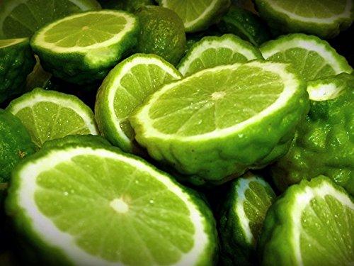 KAO KOH - Natural Herbal Shampoo for Hair Loss Prevention (Herbal Thai Leech Lime Recipe) 200ml