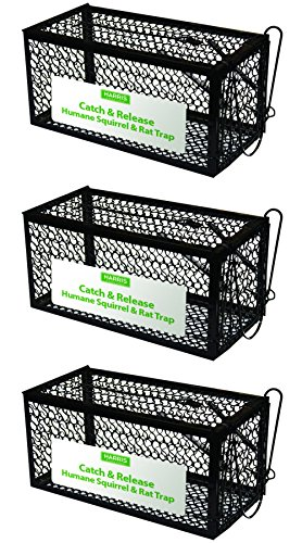 - Harris Catch & Release Humane Cage Trap for Rats, Chipmunks, and Small Squirrels (3-Pack)