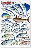 Gamefishes Tropical Atlantic and Caribbean Identification Card