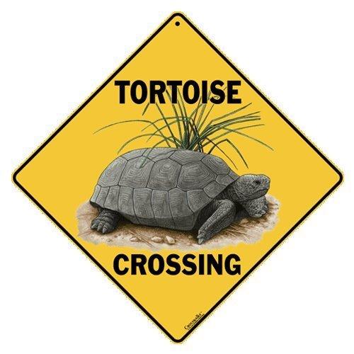 CROSSWALKS Tortoise Crossing 12