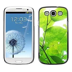 FECELL CITY // Duro Aluminio Pegatina PC Caso decorativo Funda Carcasa de Protección para Samsung Galaxy S3 I9300 // Sun Tree Green Nature Spring