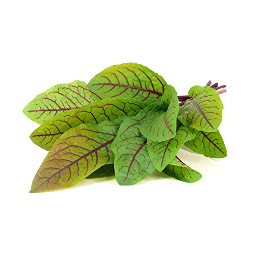 Click and Grow Smart Garden Bloody Sorrel Plant Pods, 9-Pack by Click and Grow