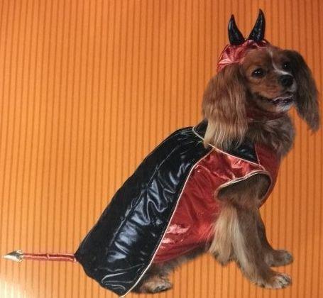 Delux Devile Dog Halloween Pet Costume ( Medium Size 13-20 Lbs)