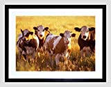 NATURE AGRICULTURE FARM ANIMAL COW CATTLE FIELD Framed Wall Art Wall Picture Frames Wall Decor Pictures for Living Room Bedroom Office 30x40 cm