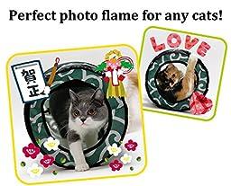 CAT1st Ninja Cat Tunnel Best Cat Toy, Green