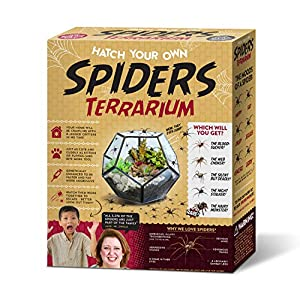 Hatch Your Own Spider Terrarium