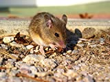 Home Comforts Framed Art for Your Wall Animal Mouse Rodent 10x13 Frame
