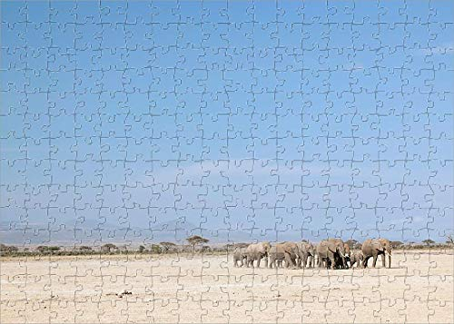 - Media Storehouse 252 Piece Puzzle of Herd of African Elephants, Amboseli National Park, Kenya (11954778)