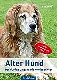 Alter Hund: Der richtige Umgang mit Hundesenioren