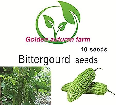 golden autumn farm - Bitter gourd 10 seeds well as beneficial for Diabetes