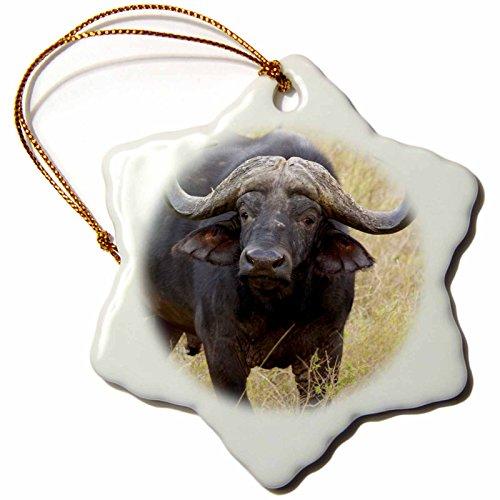 3dRose orn_76365_1 South Africa, Zulu Nyala Game Reserve, Zebra-AF42 LEN0076-Lisa S. Engelbrecht-Snowflake Ornament, Porcelain, 3-Inch