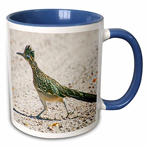 3dRose 92557_6 New Mexico, Bosque Del Apache, Roadrunner Bird Jaynes Gallery Two Tone Blue Mug, 11 oz, White