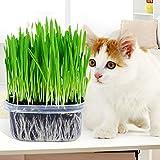 Wheat Seeds, ESHOO Wheatgrass Seeds, Plant Seeds, Cat Grass Seeds For Sale
