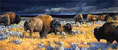 Nancy Glazier - Restless -Brand New Giclee Artist Signed Open Edition Canvas (Restless Signed)